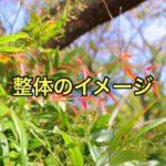 yoshizakiseitai